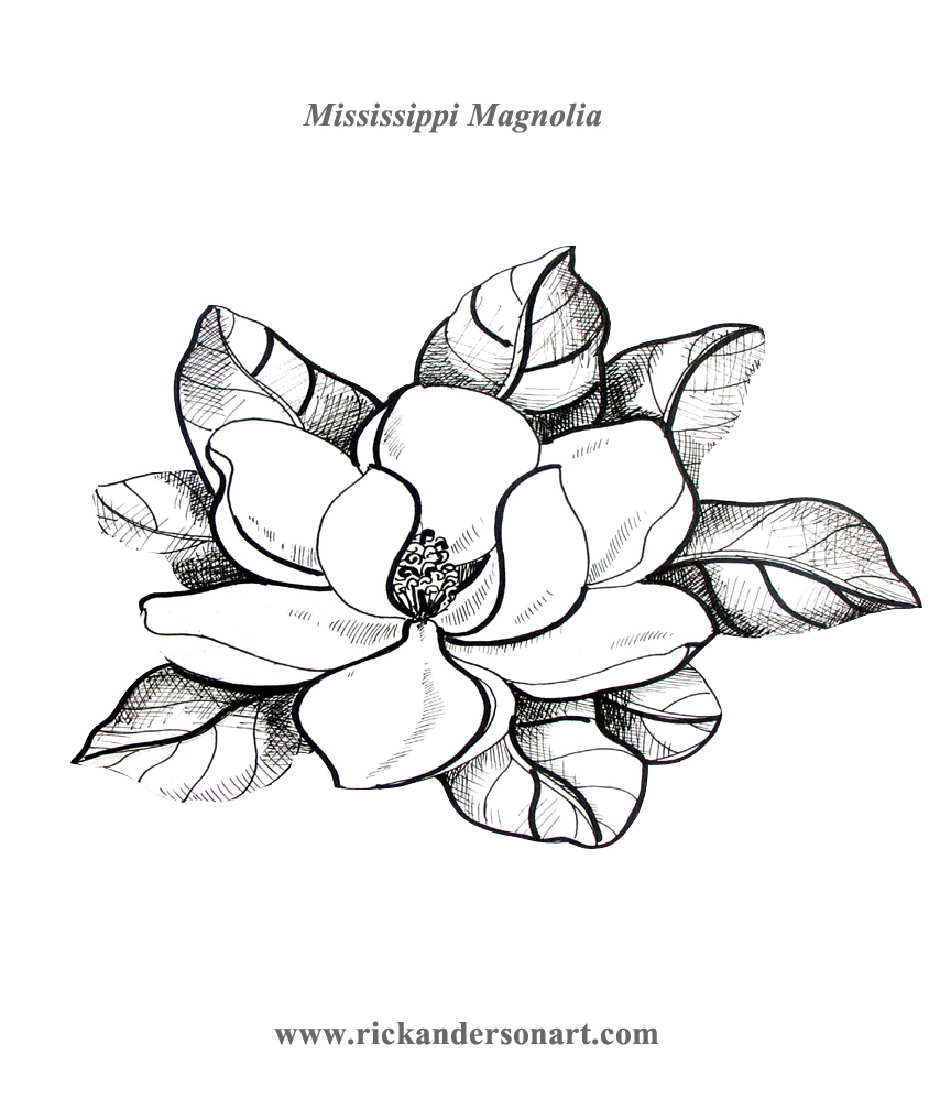 Magnolia Flower Line Drawing : Rick anderson s art page of free things teachers can print